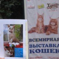 Выставка кошек: суть красоты - быть радостью всегда :: Алекс Аро Аро
