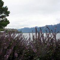Набережная. Панорама Женевского озера и Французских Альп :: Елена Павлова (Смолова)