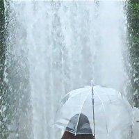 и фонтаны, и дожди... :: Елена