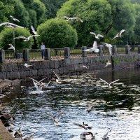 Городские чайки :: Светлана
