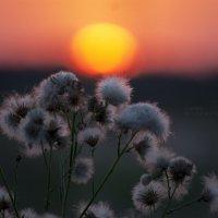 про закат... :: Марина Соколова