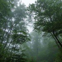 Туман в  тайге :: Жанетта Буланкина