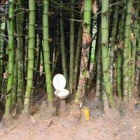 Белый друг в бамбуке :: Олег Романенко