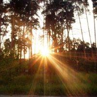 Заход солнца :: Кристина Плавская