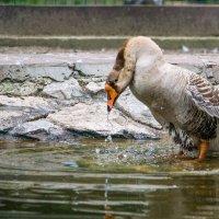 Ловись рыбка... :: Сергей Масленников
