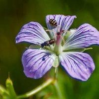на цветке :: Сергей Сол