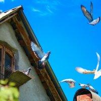 Летите голуби, летите... :: Svetlana Sneg