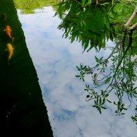 Карпы в пруду и отражение остального мира :: Ирина Сивовол