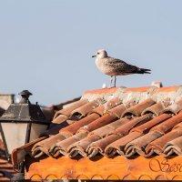 на старой крыше :: seseg Seseg
