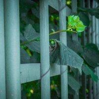 Летний сад :: Жанна Устенная