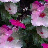 Цветочные фантазии... :: Тамара (st.tamara)