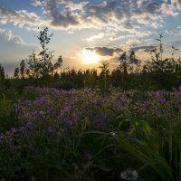 Цветочный закат... :: Виктор М