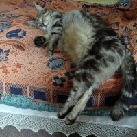 Барсик спит :: Елена Смирнова