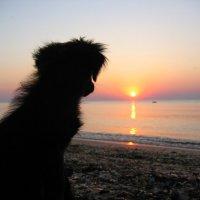 Утро будет добрым! :: Андрей Батранин