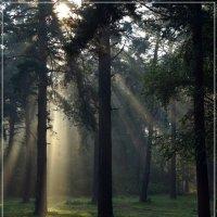 Утренний лес :: Виктор Бондаренко