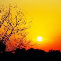 Просто закат... :: Лариса Журавлева