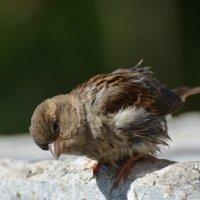 любопытный малыш :: linnud