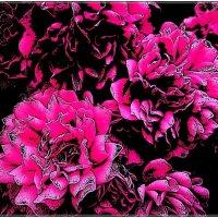 Пышное цветение :: Нина Корешкова