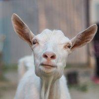 Сделать хотел грозу, а получил козу :: Ayse 1