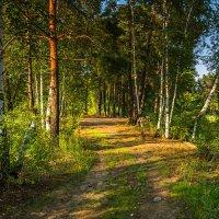 В лесу :: Александр Тулупов