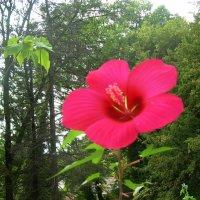 Пейзаж с цветком :: татьяна