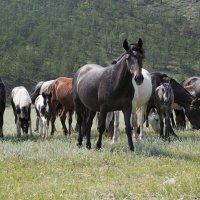 лошадки... :: Алиса Колмагорова