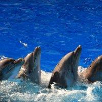 Синхронное плавание или необычный хоровод в Сочинском дельфинарии :: Vladimir 070549