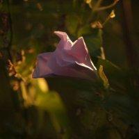 Фото на заходе солнца :: Кристина Плавская
