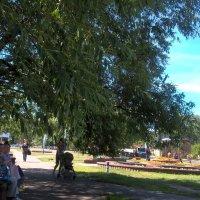 В тени деревьев :: Елена Семигина
