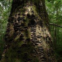 волшебный лес :: Михаил Жуковский