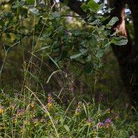 Цветы под яблоней :: Длинный Кот