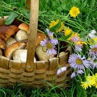 Первые грибочки :: Светлана