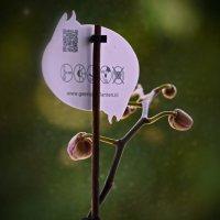 Завязь орхидеи :: Валерий Лазарев