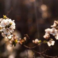 Вспомним о весне :: Екатерина Стяглий