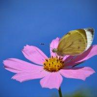 Бабочка и цветок... :: *MIRA* **
