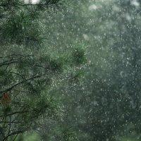 Звонкий Дождь :: KotoPalych Gf
