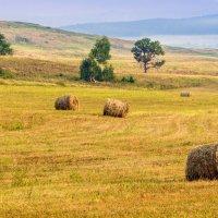 Время собирать урожай :: Любовь Потеряхина