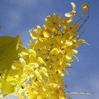 цветочек радостно встречает солнышко :: Ефим Журбин