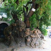 Старое дерево :: Ольга Васильева