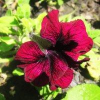 Красивый цветок :: татьяна
