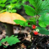 В июльском лесу :: Андрей Куприянов