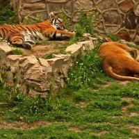 Хищники, как всегда, дрыхнут... :: Светлана