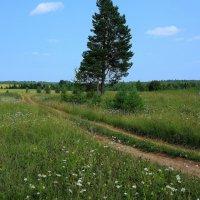 Дорога в лето. :: Galina S*