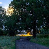 Щебечут птицы после сна, а за ветвями прячется луна. :: Евгений Голубев