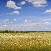Ромашковое поле :: Елена Фомина