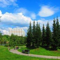 Красивые ёлочки и дорожка :: Людмила Монахова