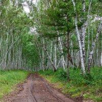 в лес! :: Сергей Сол