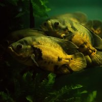 рыбки :: Vladimir Valker