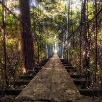 подвесной мост :: svabboy photo