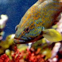 Рыба в горошек :: Ольга Голубева
